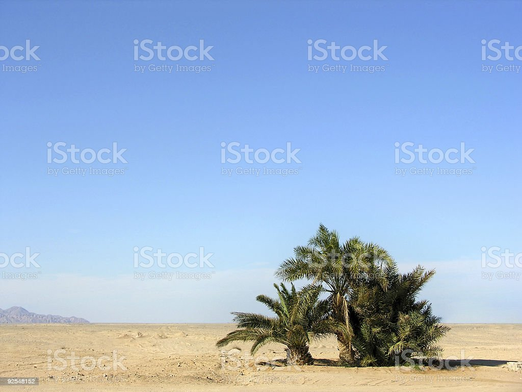 oasis in desert royalty-free stock photo