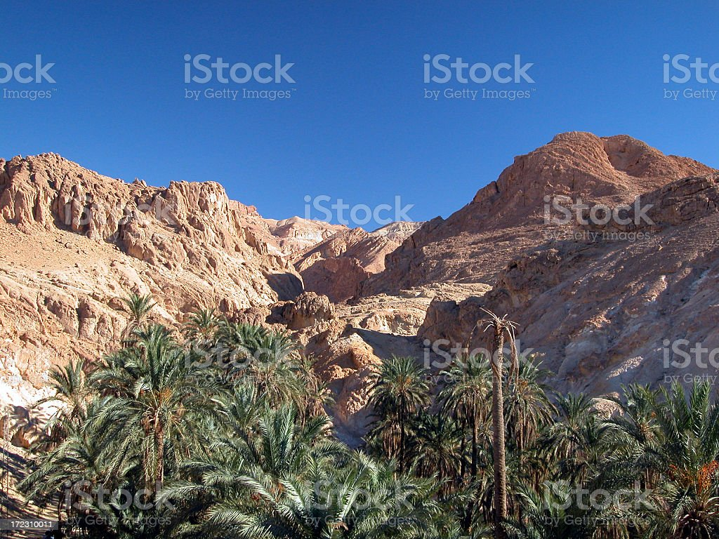 Oasis in Desert with Blue Sky stock photo