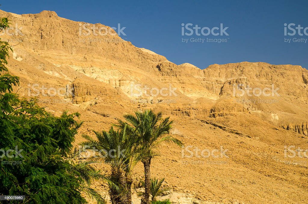Oasis in Judean desert with palm trees stock photo