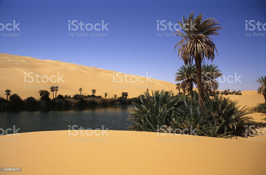 Oasis in Libyan desert stock photo