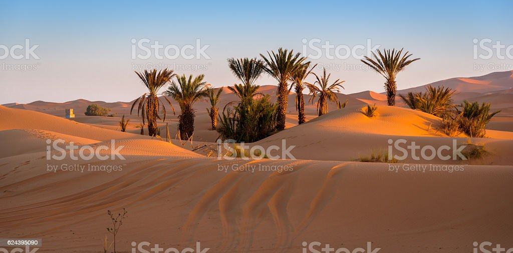 Oasis in Merzouga, Morocco stock photo