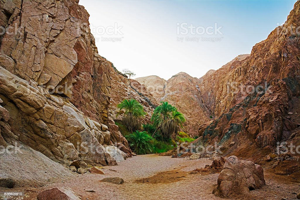 Oasis in the mountains stock photo
