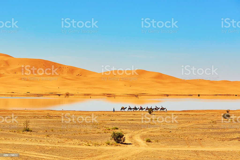 Oasis lake in Sahara desert, Merzouga, Africa stock photo