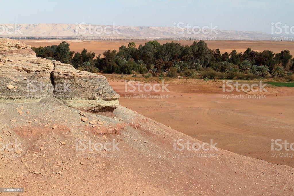 Oasis of El Qasr in the Sahara desert stock photo