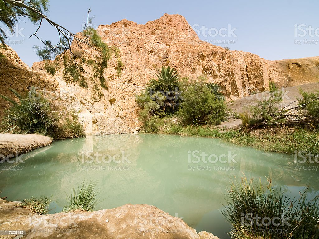 Oasis on the desert 3 stock photo