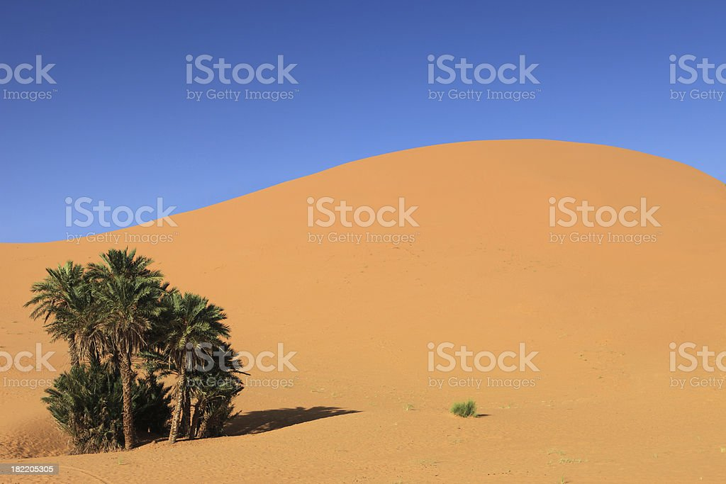 Oasis, Palm Trees in Sahara Desert, Merzouga, Morocco stock photo