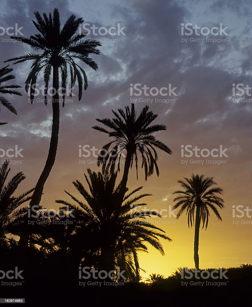 Oasis Tozeur, Tunisia stock photo