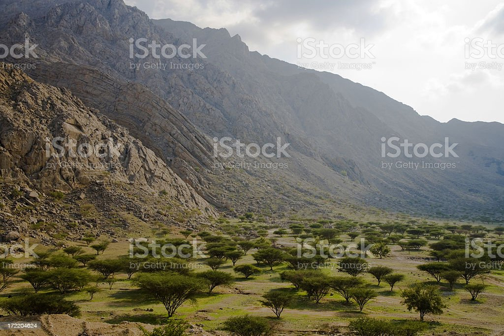 Oasis Wadi Mileiha Mountains United Arab Emirates stock photo