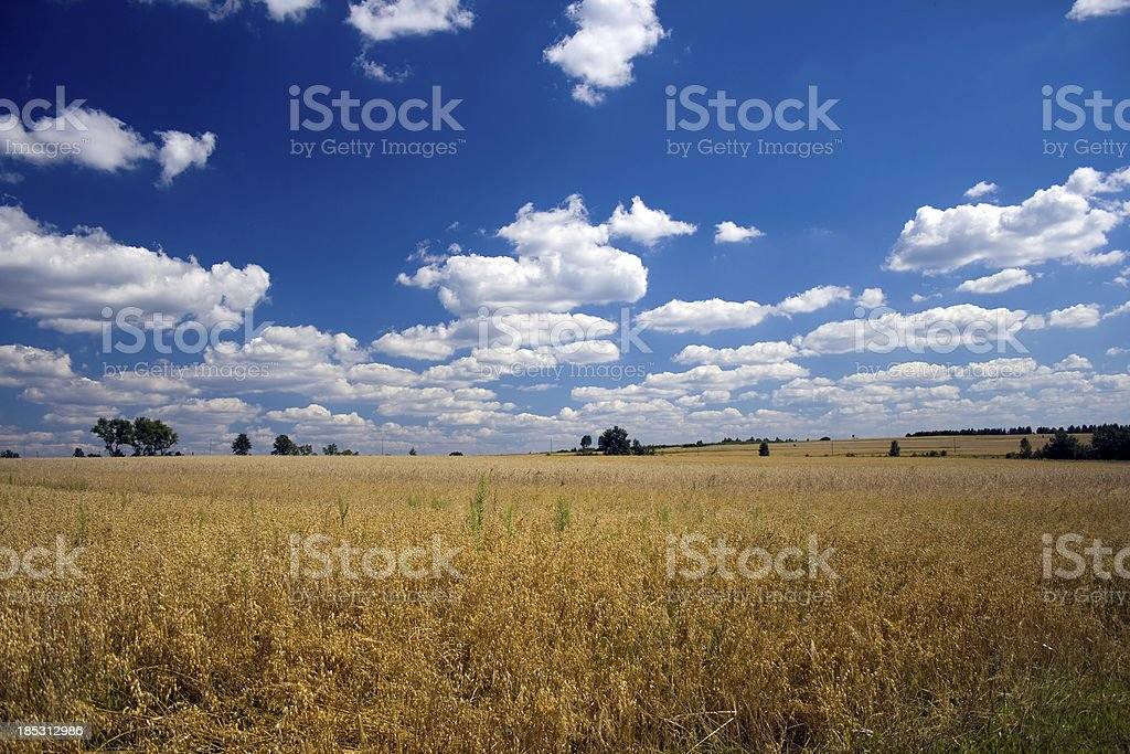 oat field royalty-free stock photo