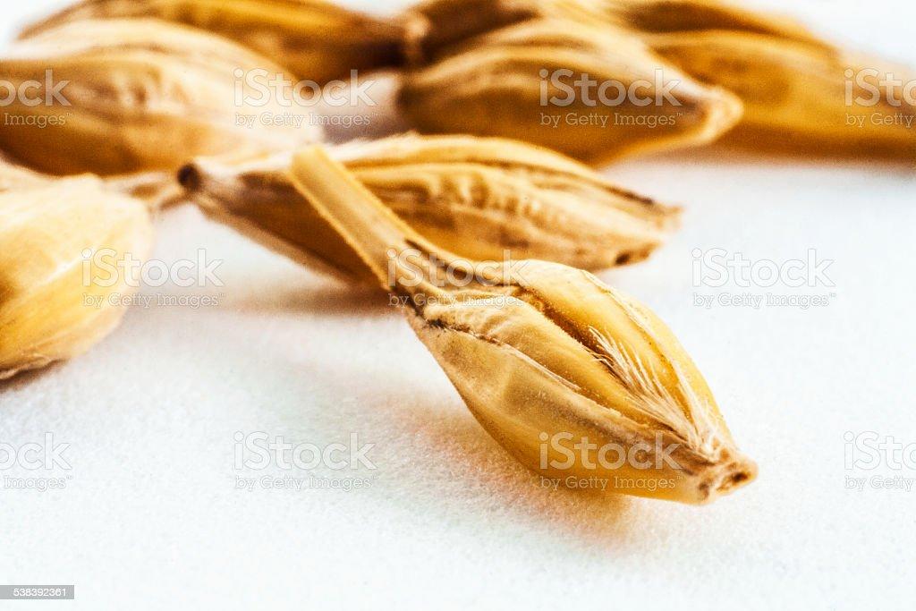 Oat grain stock photo