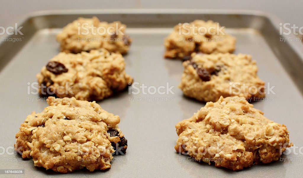 Oatmeal raisin cookies cooling on a baking sheet stock photo