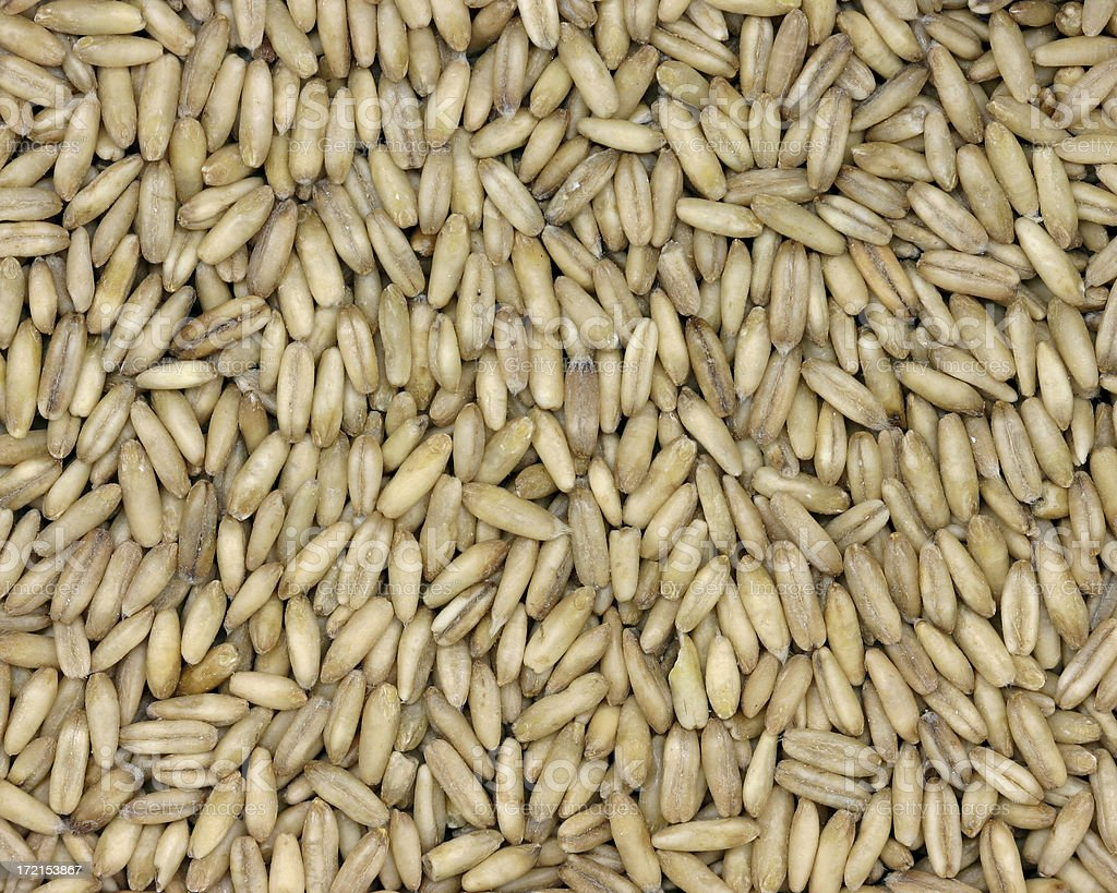 oats (whole groats) stock photo