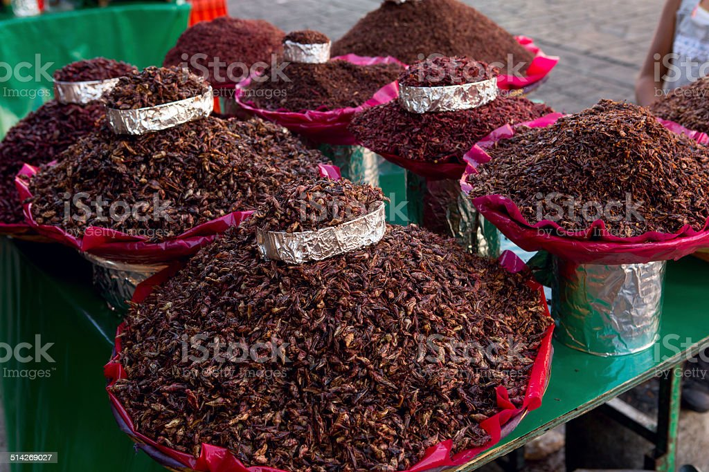 Oaxaca chapulines stock photo