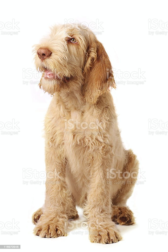 obedience royalty-free stock photo