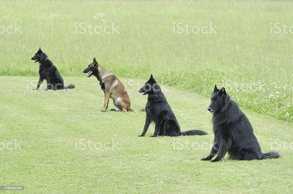 obedience stock photo