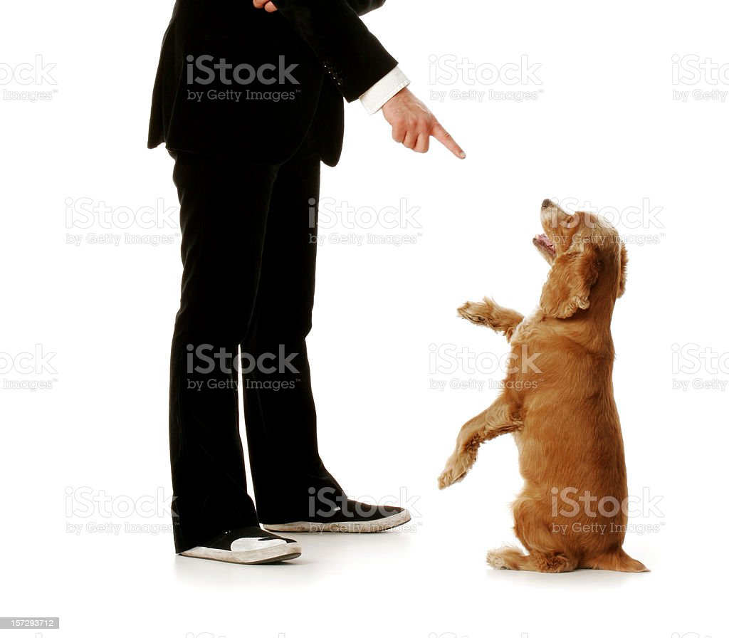 Obedient dog and well dressed man. royalty-free stock photo
