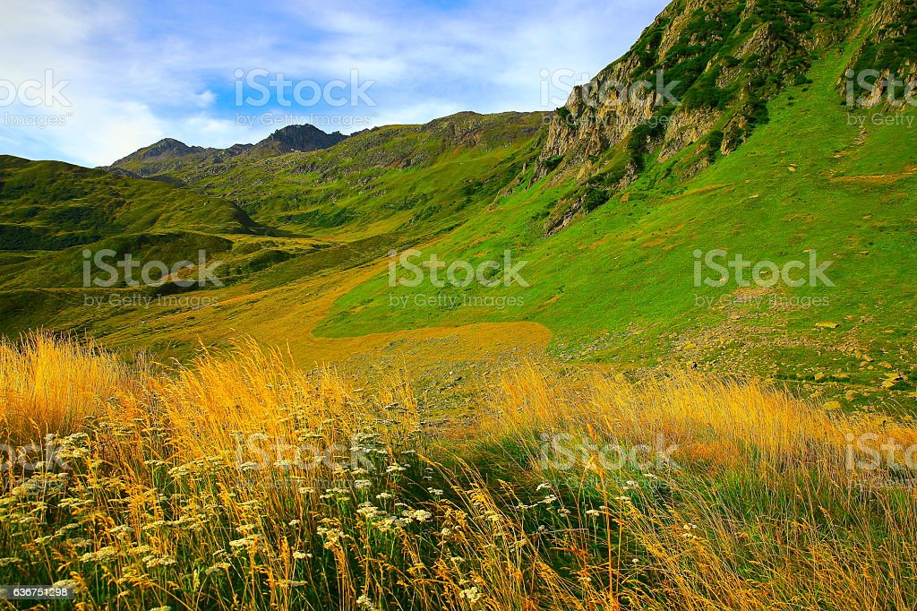 Oberalp mountain pass, flowerbed wildflowers, gold sunrise, Swiss Alps, Graubunden stock photo