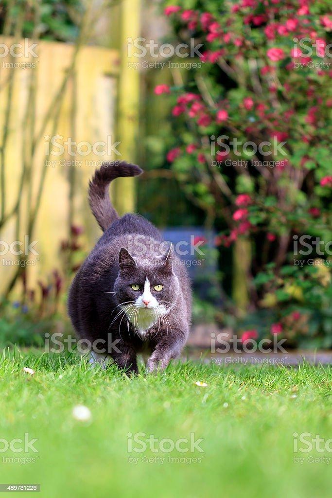 Obesity in the garden stock photo