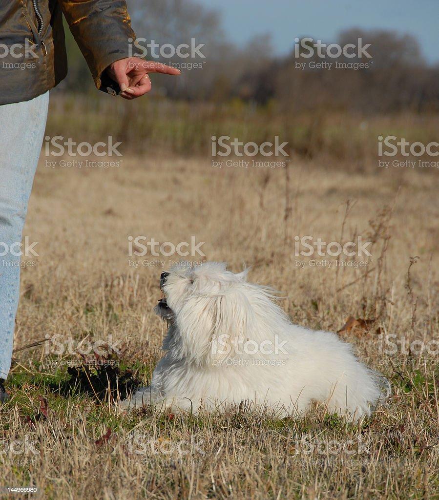 obeying dog stock photo