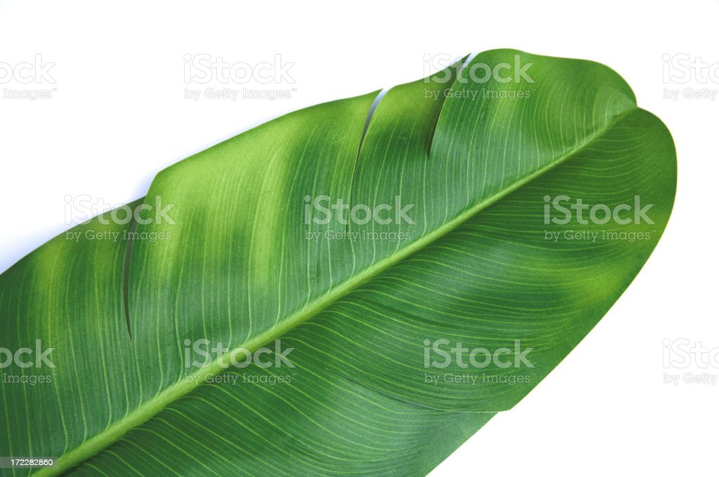 Object White Background Banna Leaf stock photo