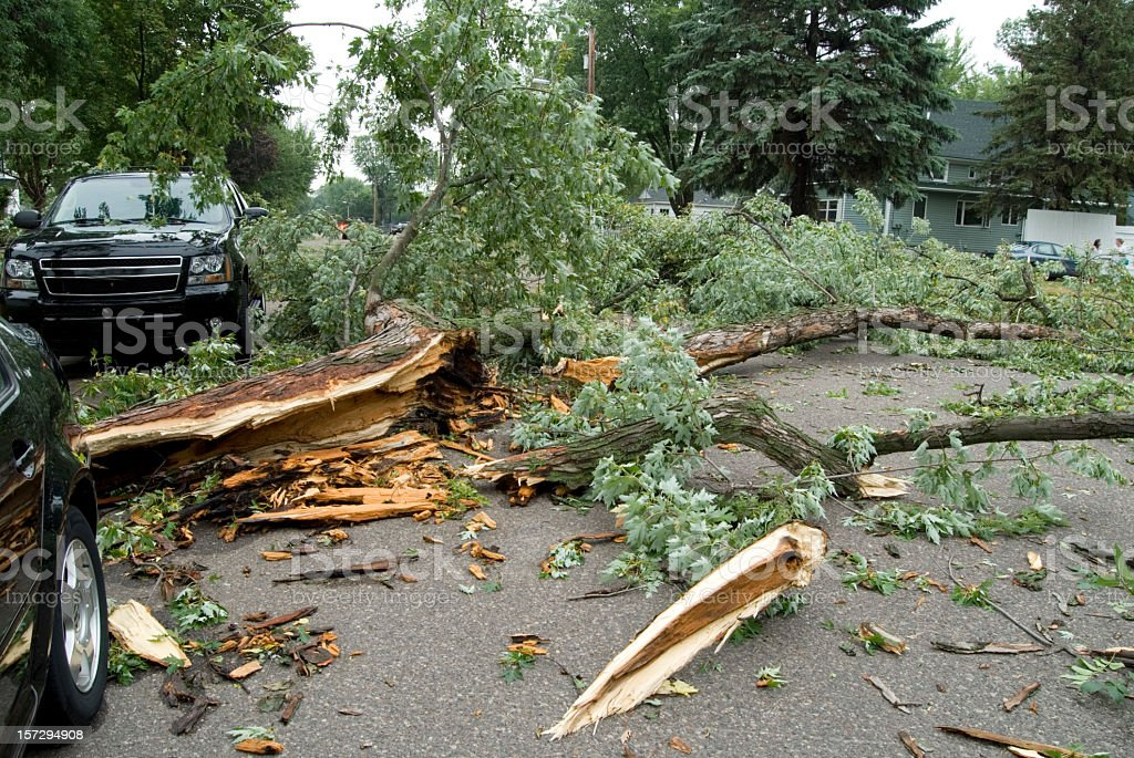 Obliterated trees from storm damage stock photo
