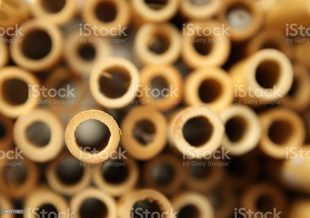 Oboe Cane stock photo