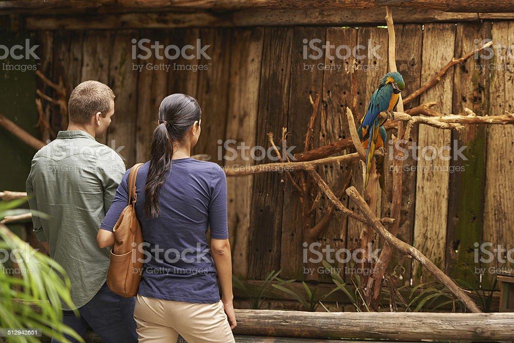 Observing bird life stock photo