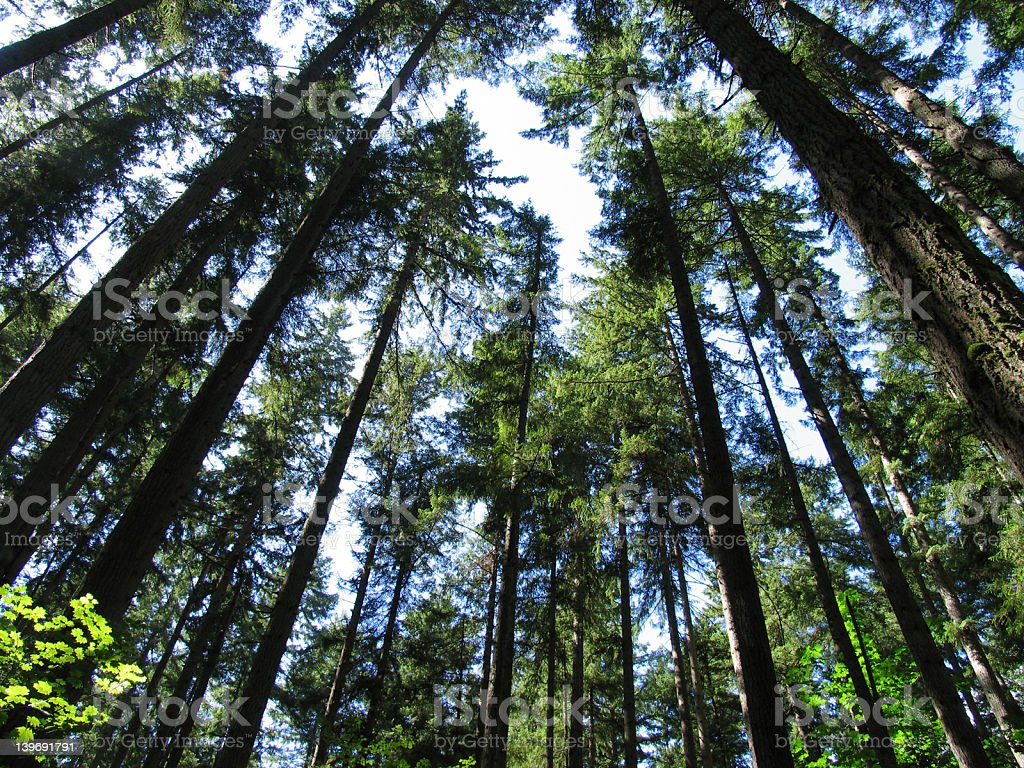 observing the trees royalty-free stock photo
