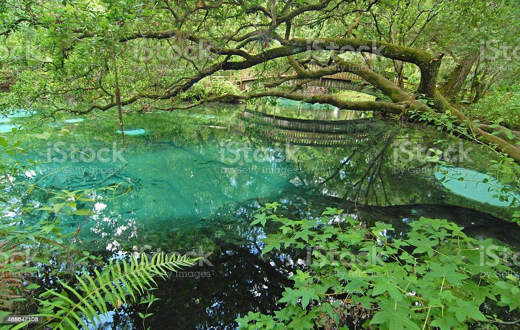 Ocala National Forest - Juniper Springs stock photo