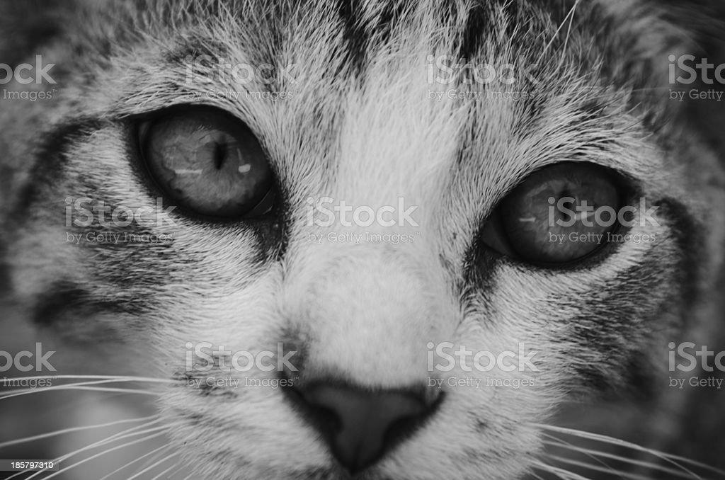 Occhi di gatto stock photo