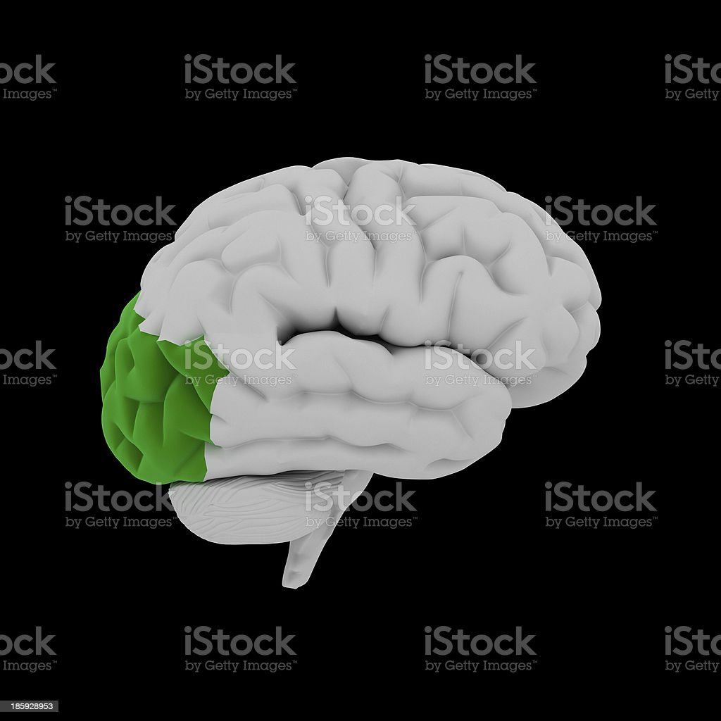 Occipital lobe - Human brain in side view royalty-free stock photo