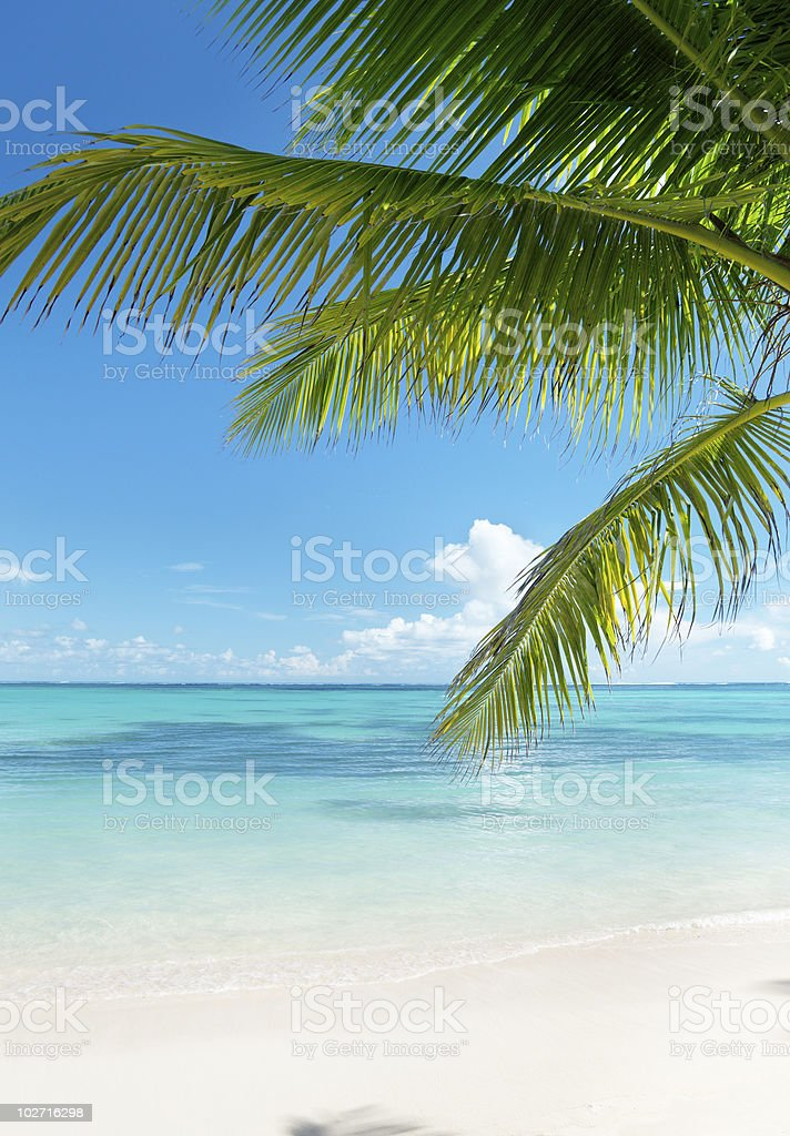 ocean and coconut palms royalty-free stock photo