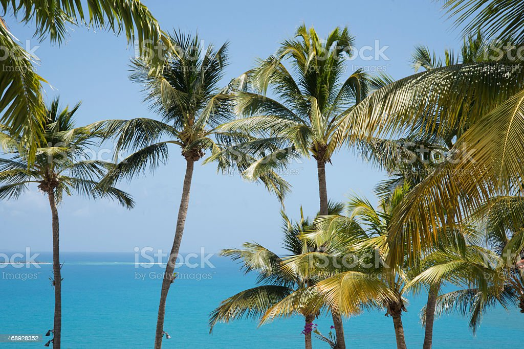 Ocean and palm trees stock photo