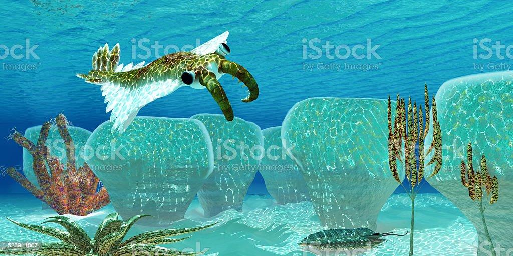 Ocean Anomalocaris stock photo