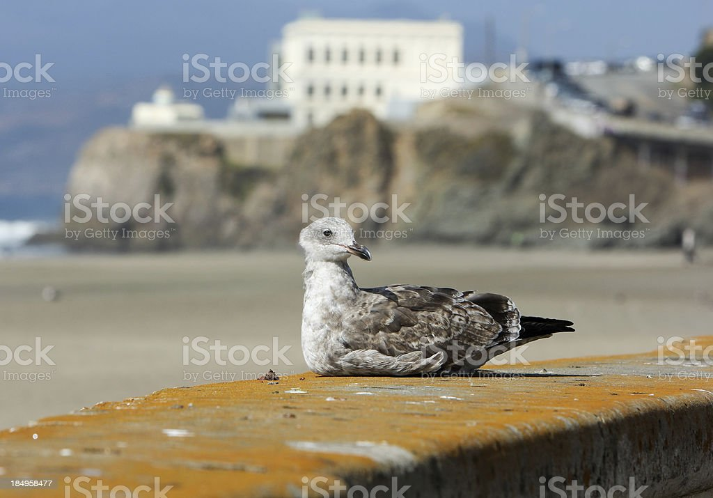 Ocean Beach in San Francisco, California royalty-free stock photo