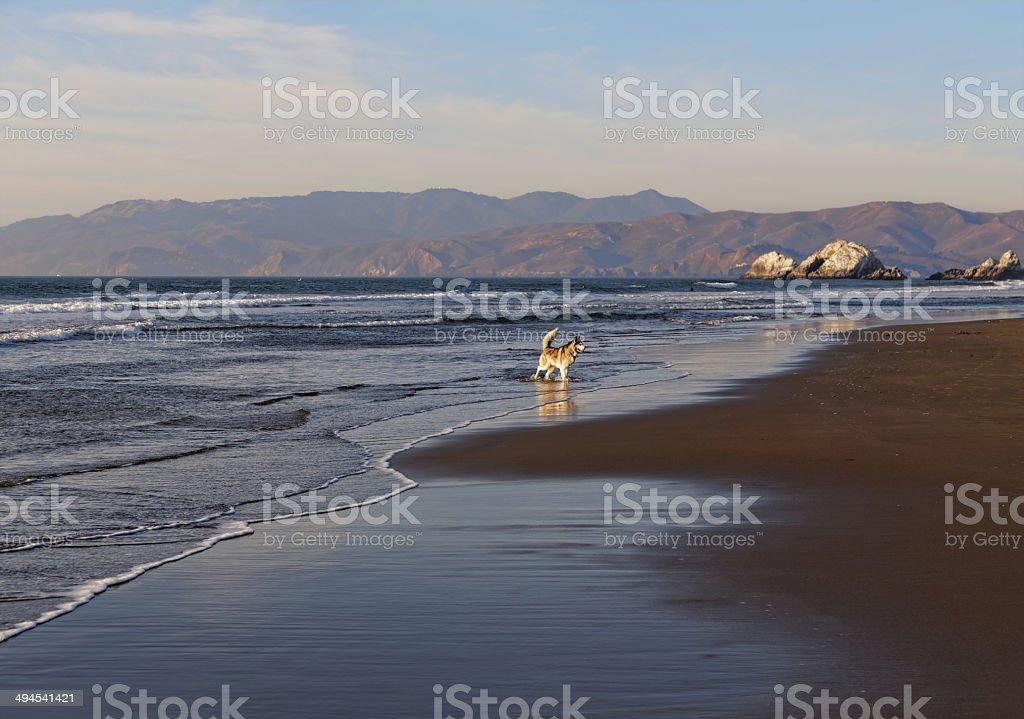 Ocean Beach San Francisco royalty-free stock photo