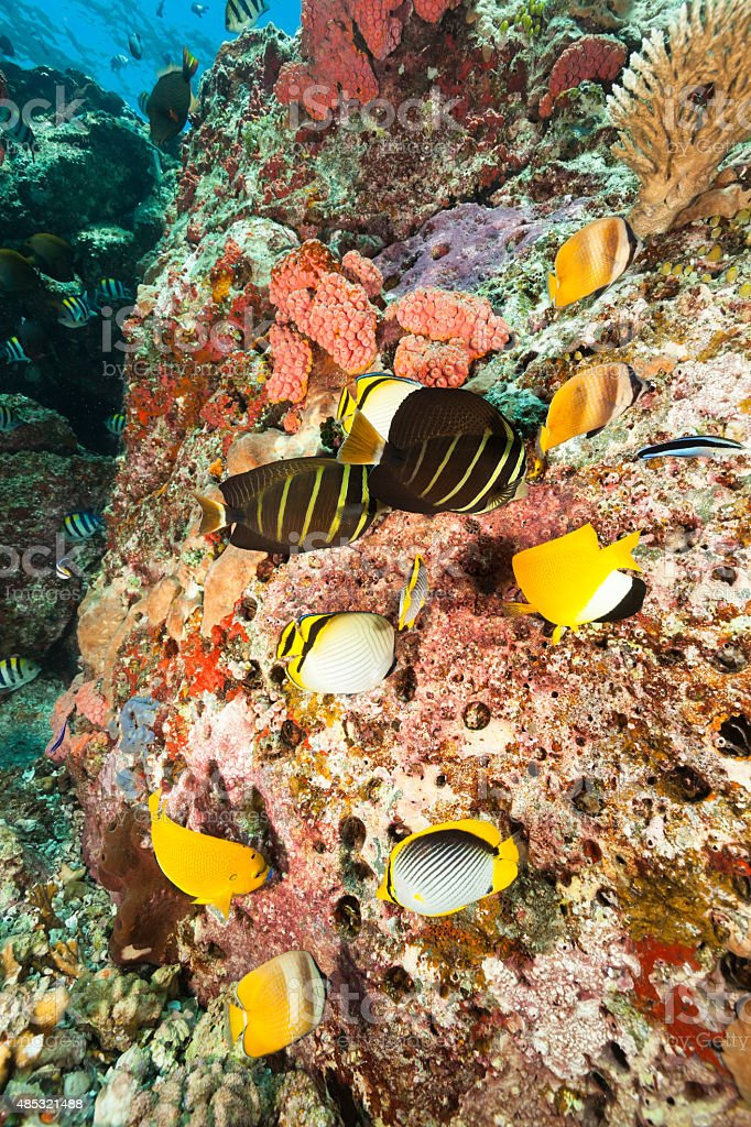 Ocean Beauty Contest, Butterfly-, Angel-, Surgeonfishes, Komodo Nationalpark, Indonesia stock photo