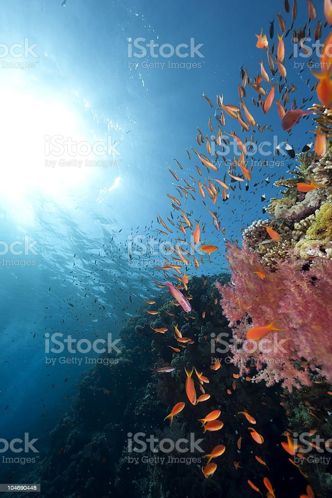 ocean, coral and fish royalty-free stock photo