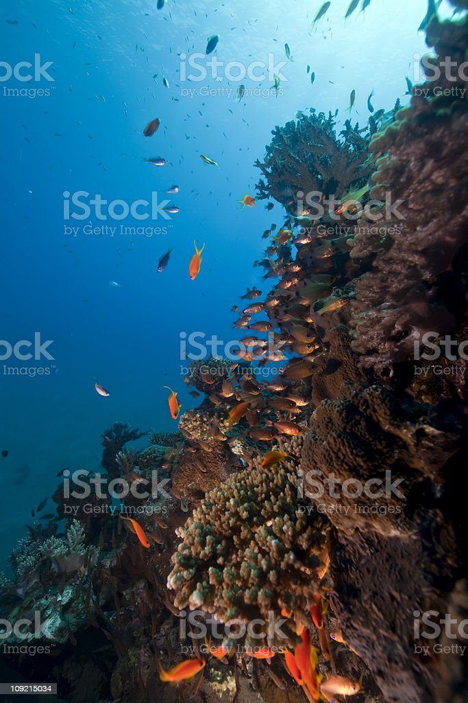ocean, coral and fish. stock photo