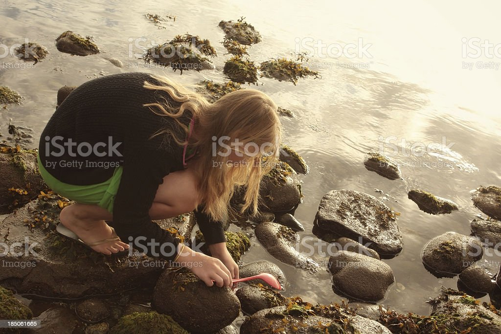 a young girl in the glow of dawn\'s light searching in low tide for...