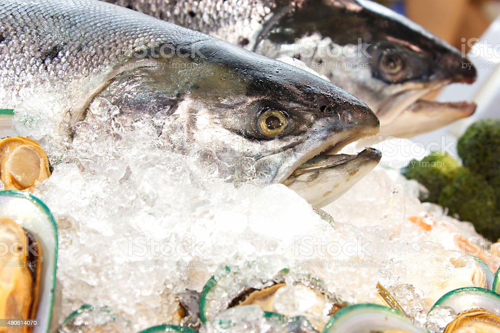 Ocean fish stock photo