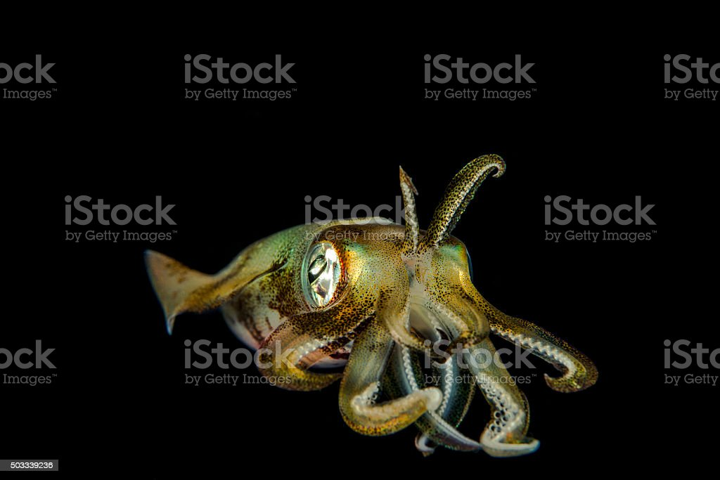 Ocean monster stock photo