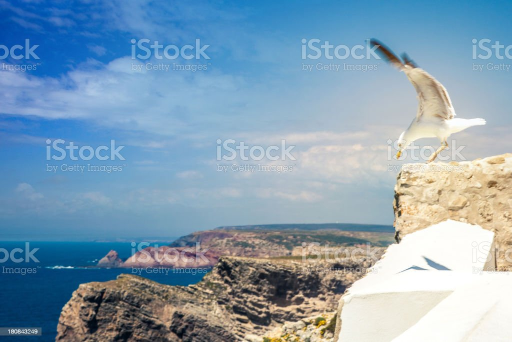 Ocean Seagull royalty-free stock photo