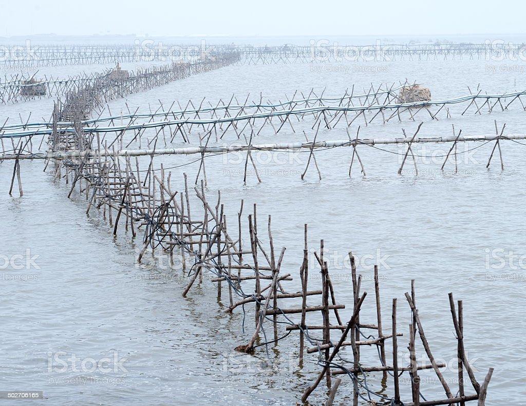 Ocean seaweed farm stock photo