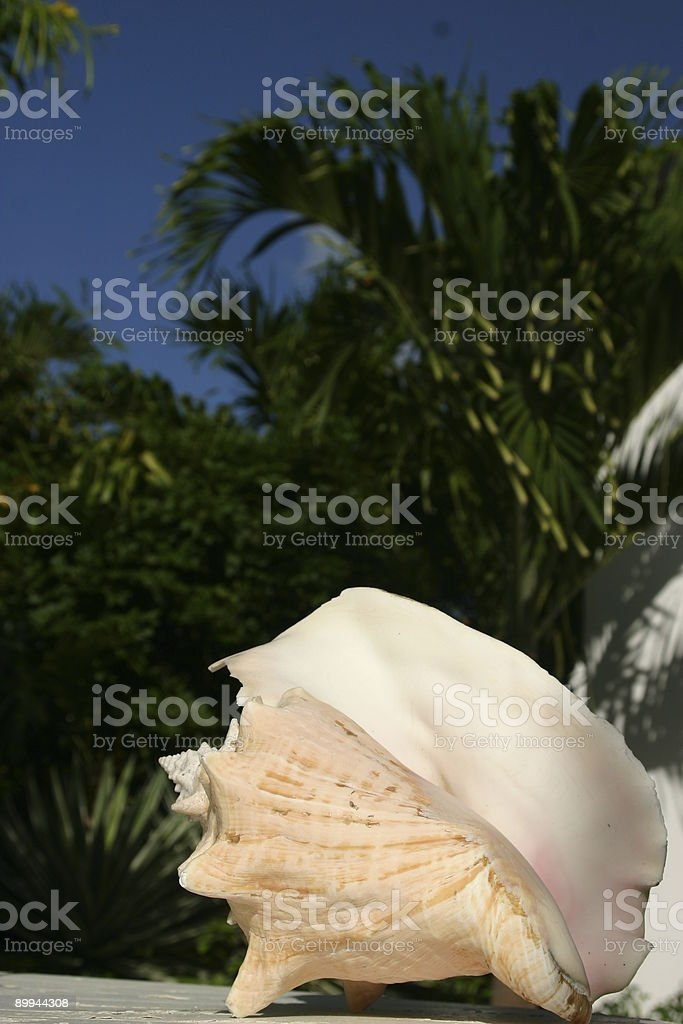 Ocean Shell stock photo