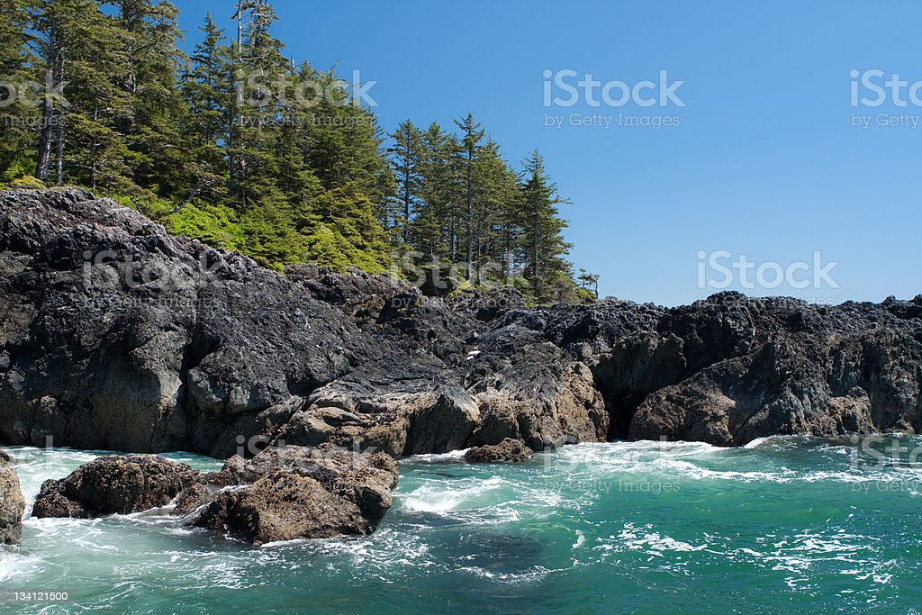 Ocean shore with forest royalty-free stock photo