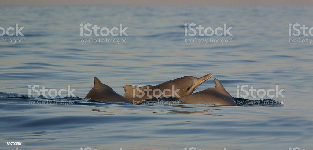 Ocean spirits stock photo