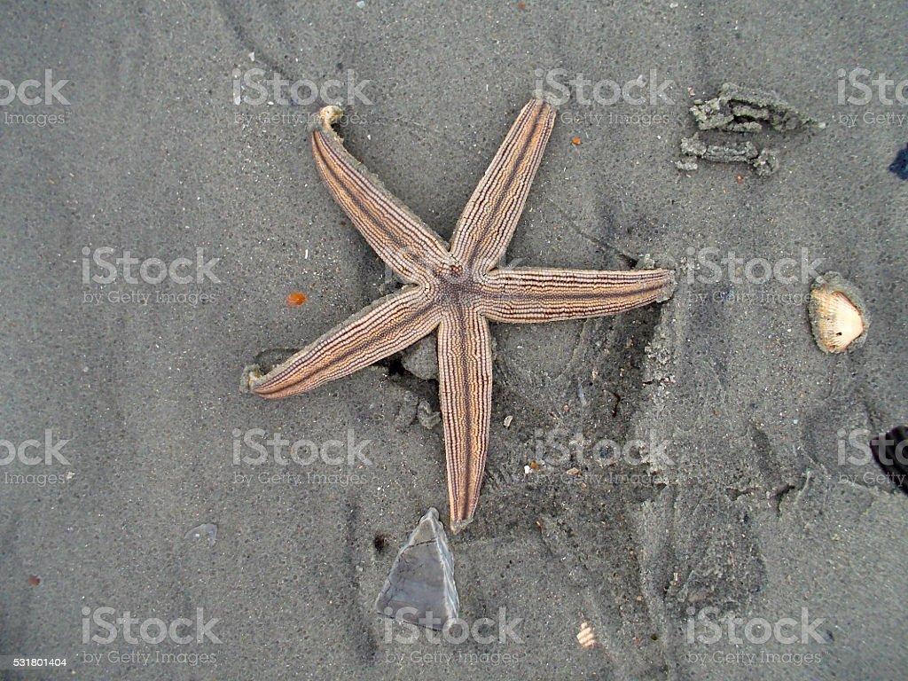 Ocean Starfish royalty-free stock photo