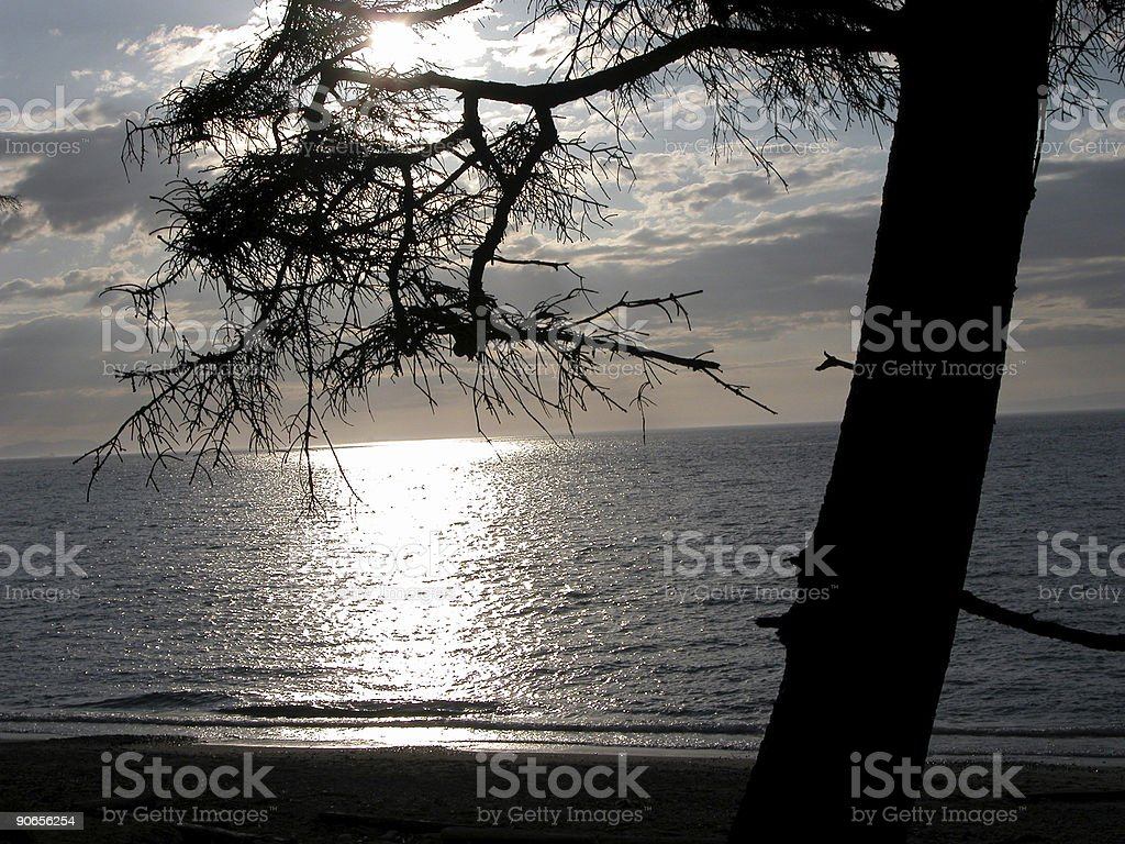 Ocean sunset w/ tree branch royalty-free stock photo