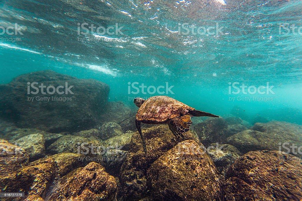 Ocean turtle stock photo